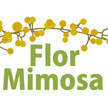 Flor-Mimosa